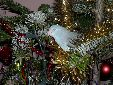 my female parrotlett loved the christmas tree she decided too camp out in it for 2 weeks.