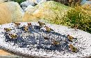 Goldfinches feeding.